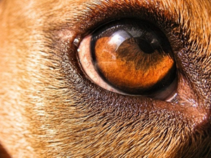 Собаки: породы не для квартир